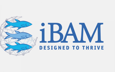 TEACH A MAN TO FISH: HOW THE IBAM CURRICULUM FOSTERS KINGDOM BUSINESS